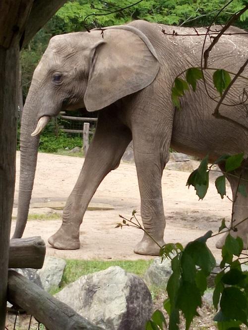 Elephant Zoo la fleche